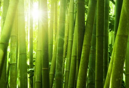 bambu_sol_muralesyvinilos_15766127__XL